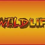 The Wild Life Slot Vlt Online Gratis